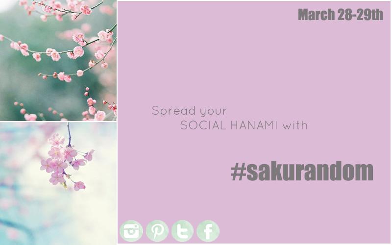 sakurandom 2015 sakura ciliegi Giappone